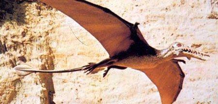Рамфоринх динозавр: период, фото