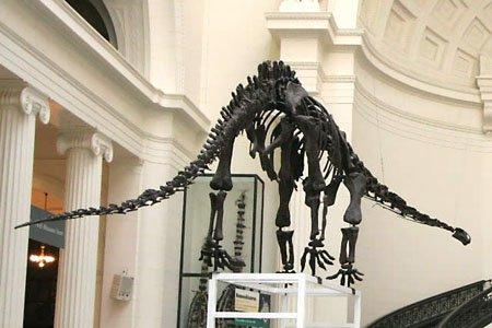 Маменчизавр: шея