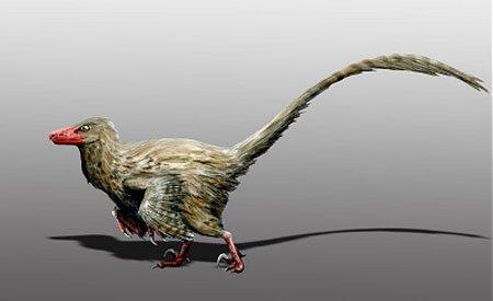 Фалкарий (Falcarius utahensis) или новый вид динозавров