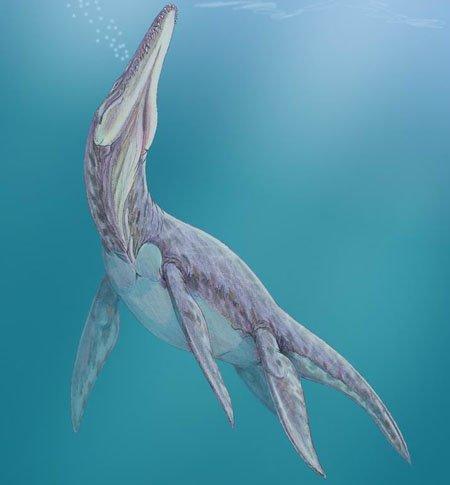 Мегалнеузавр плавающий ящер