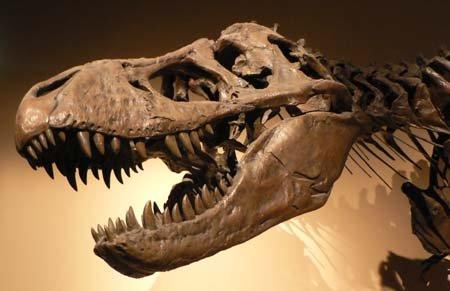 Динозавр с мощным черепом
