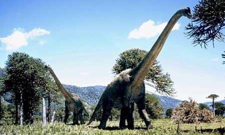 Есть ли отличия между гигантскими динозаврами?