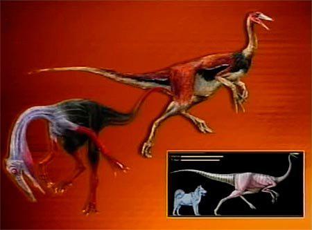 Птицы бывшие динозавры: уменьшение в размерах