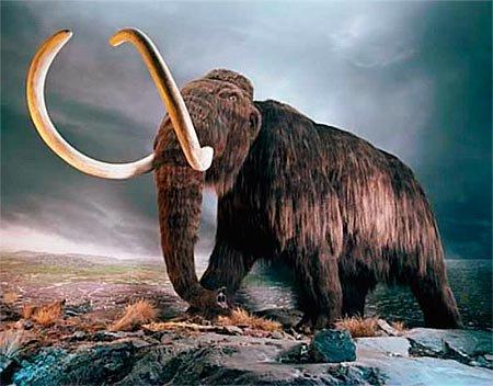 Почему вымерли мамонты?