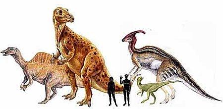 Орнитоподы