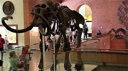Московский Палеонтологический музей. По следам прошлого Земли