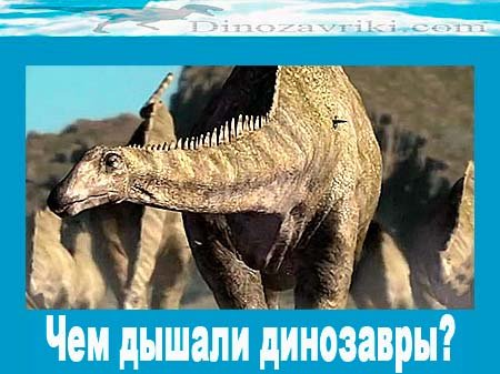 Чем дышали динозавры?