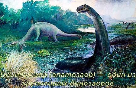 10 самых распространенных заблуждений о динозаврах