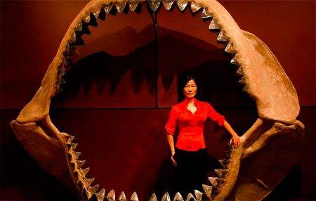 Современница эпохи динозавров – акула Мегалодон