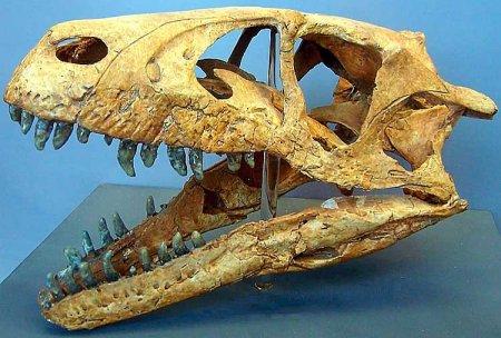 Стремительный ящер - дромеозавр