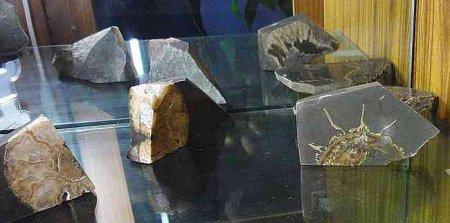 Древние окаменелости растений и животных