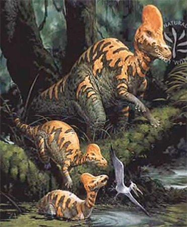 Коритозавр: положения о систематике