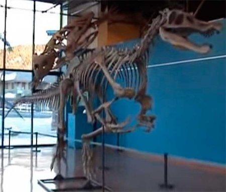 Спинозавриды: рост
