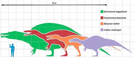 Спинозавриды: длина