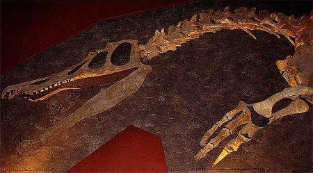 Спинозавриды: челюсть