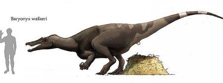 Спинозавриды: Baryonyx walkeri