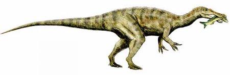 Спинозавриды:  Барионикс питался рыбой