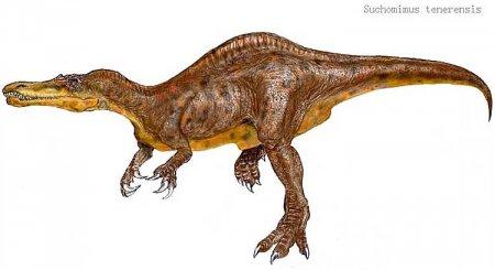 Спинозавриды: Suchomimus tenerensis