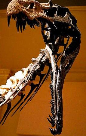 Спинозавриды: рыло