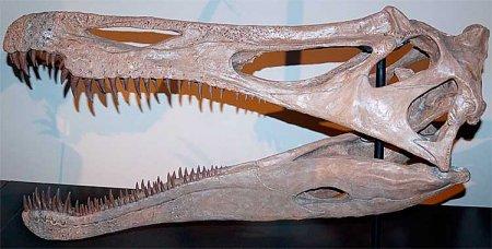Спинозавриды: сила сжатия