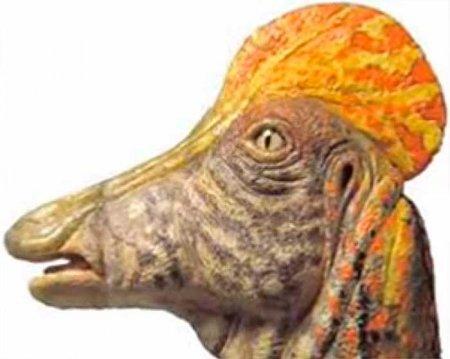 Коритозавр: особенности подсемейства
