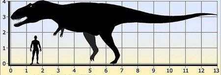 Представитель хищных теропод - Гиганотозавр
