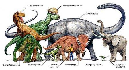 Древние травоядные животные образ жизни эдафозавра