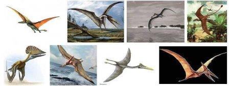 Жизнь динозавров на Земле: птерозавры