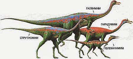 Галлимим динозавр: сравнение