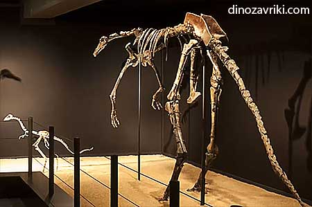 Галлимим динозавр: скелет