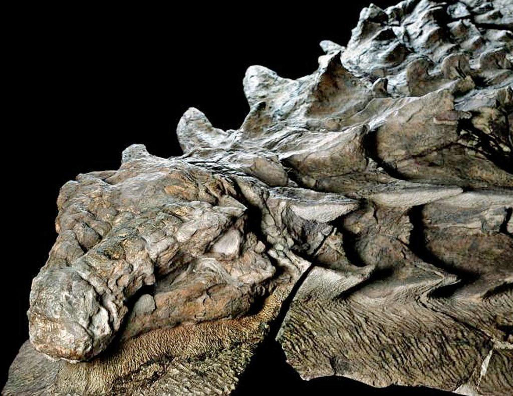 Какая кожа у динозавров?