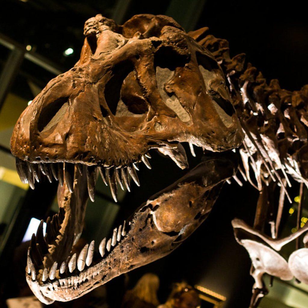 Почему динозавры не дожили до нашего времени?