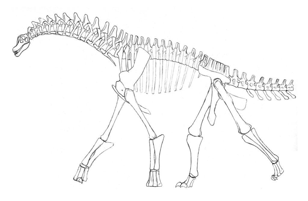 Изизавр - вид титанозавров