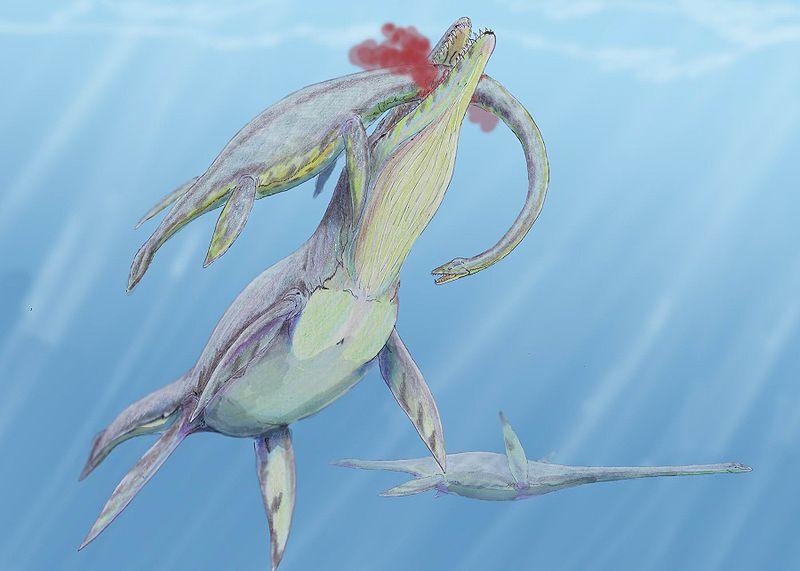 Мегалнеузавр - плавающий ящер