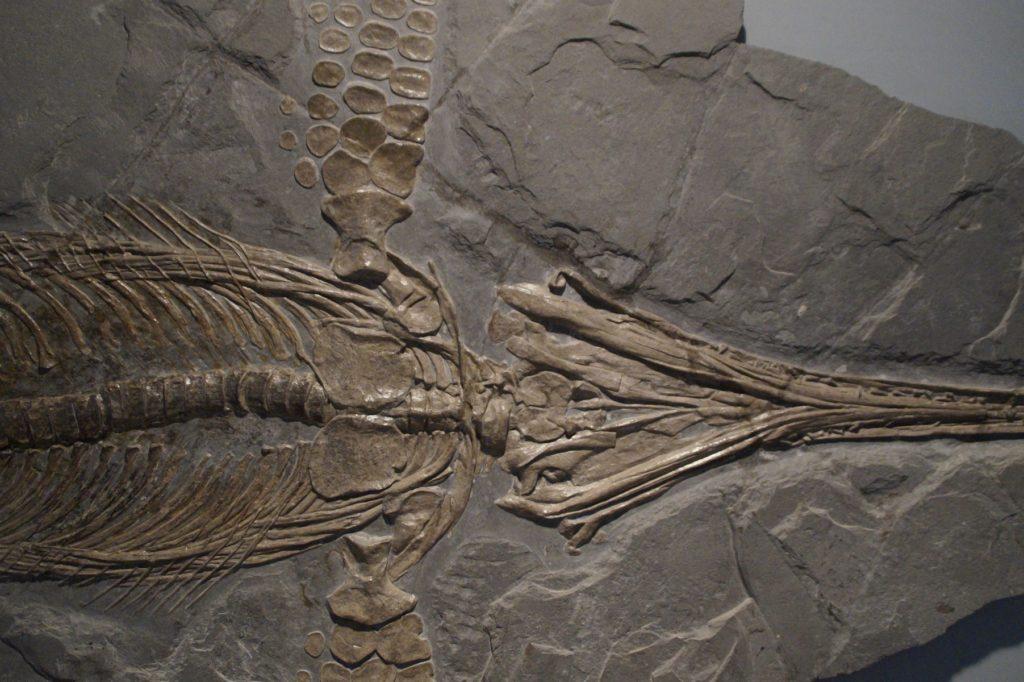 Что мы знаем об окаменелостях