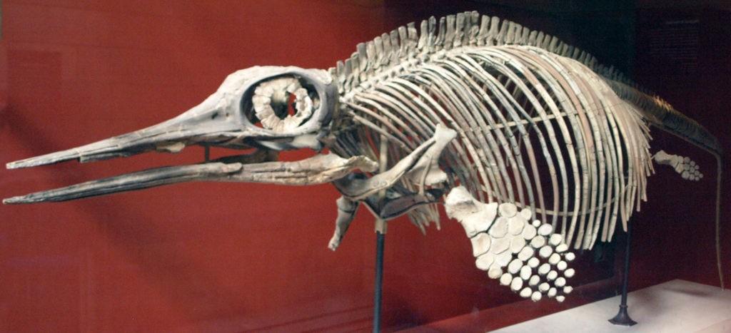 """""""Глазастый ящер"""" - офтальмозавр"""