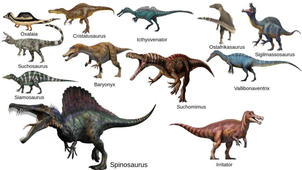 Динозавры семейства Спинозавров