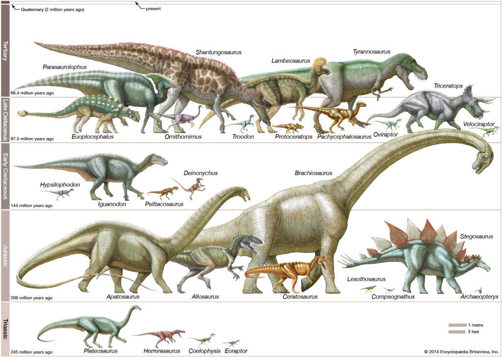 Основные группы динозавров?
