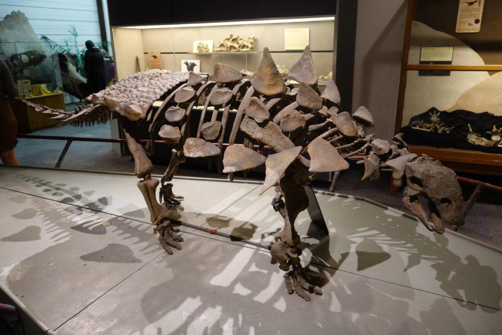 Динозавр Гастония: когда, где, кем был открыт и что собой представлял