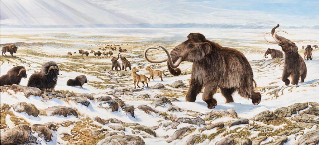 Животные ледникового периода: названия, жившие и какие были, вымершие, которые выжили