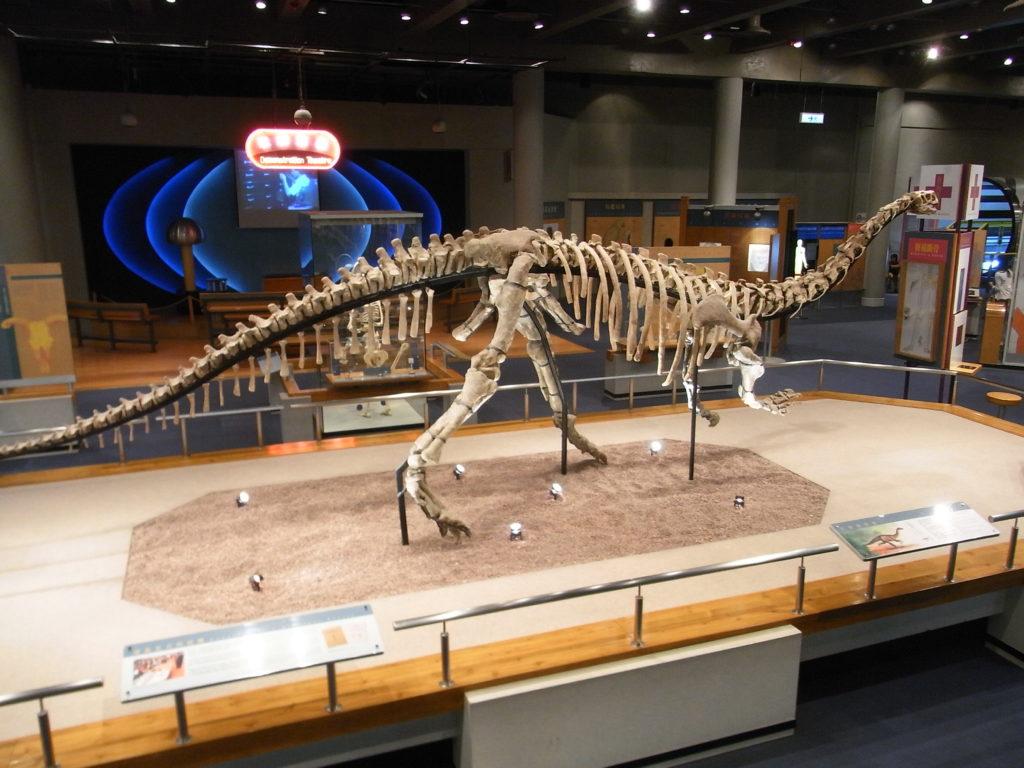 Наука о динозаврах называется палеонтология: когда появились и вымерли, как жили и какими были динозавры