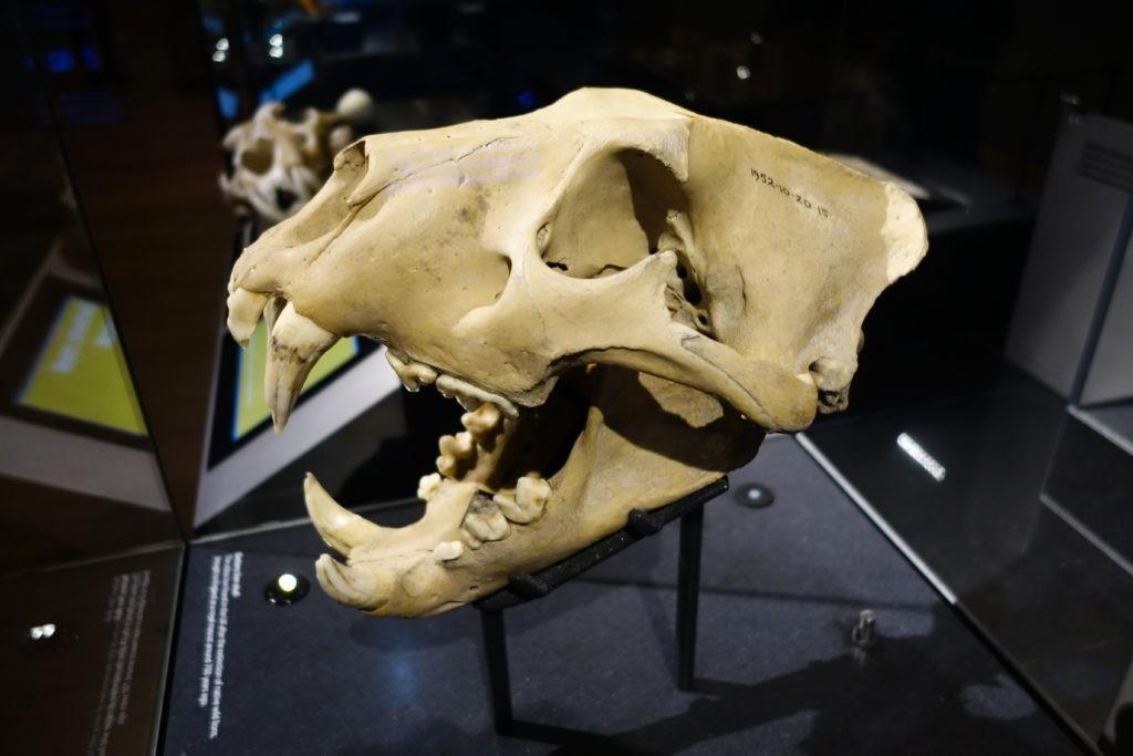Актуальная болезнь, которой болели даже динозавры: отгадай слово в игре «Поле чудес» или ещё один интересный факт из жизни древних ящеров