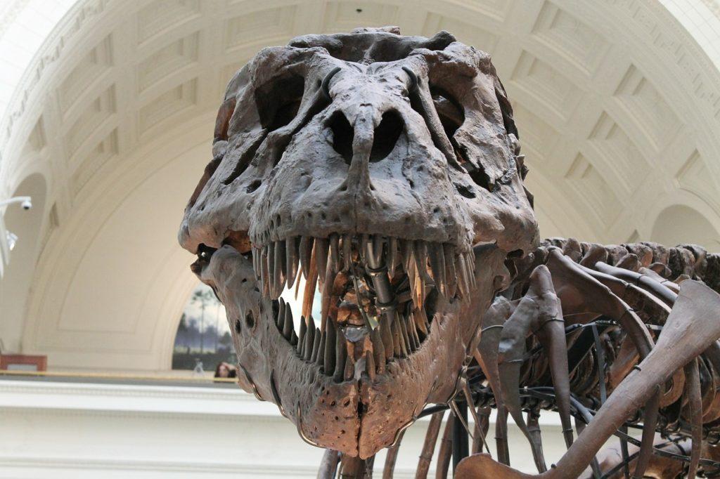 Доисторический скелет тираннозавра
