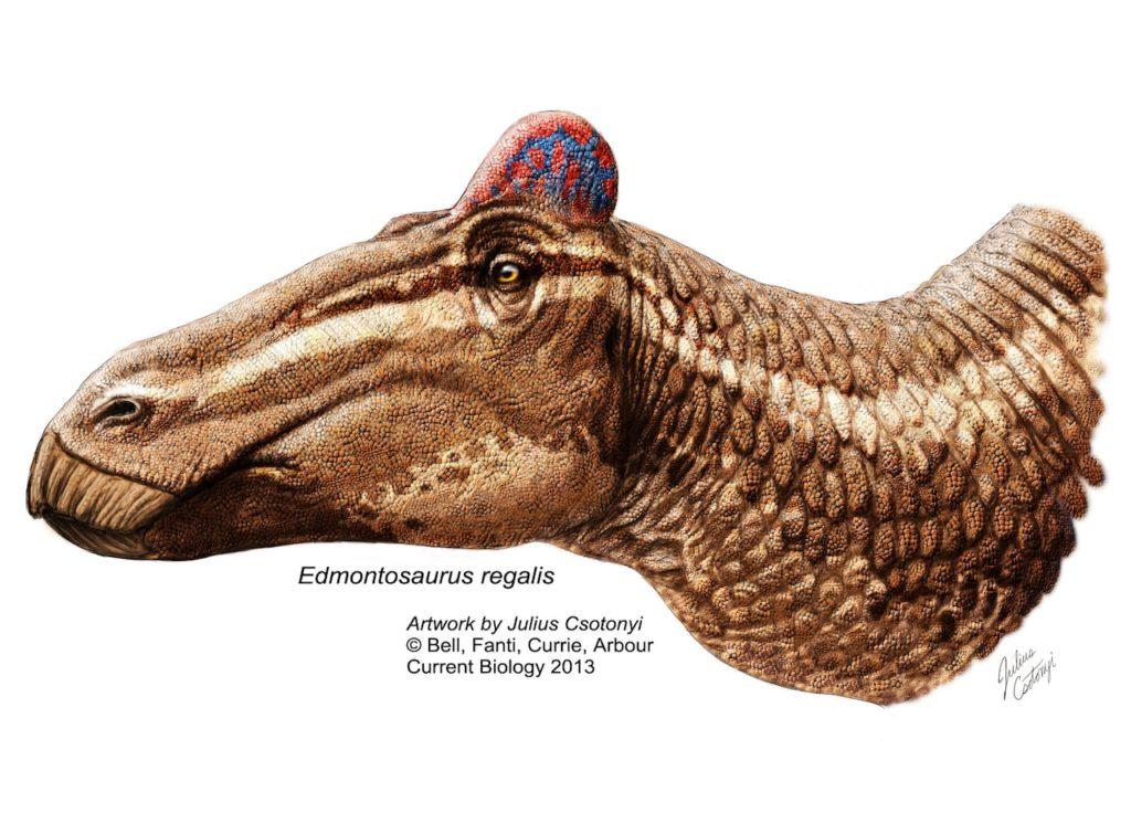 Динозавр с гребнем на голове: первый в своем роде